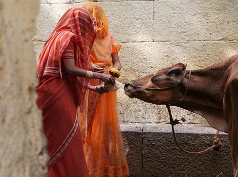 Россельхознадзор рассмотрит возможность поставок молочной продукции из Индии